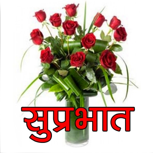 Red Rose Flower Suprabhat Images