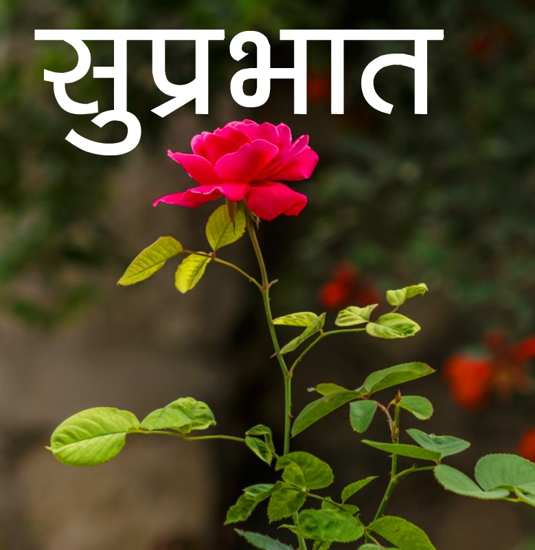 Flower Suprabhat Images Download for friend In 1080P