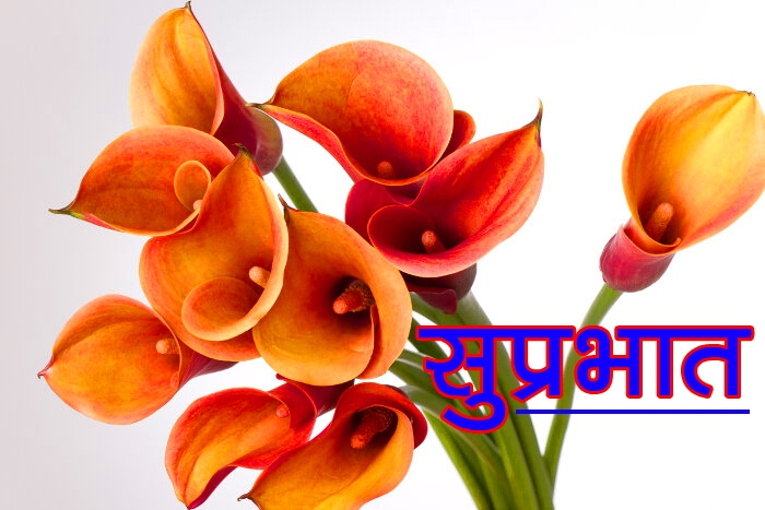 Flower Suprabhat Images Pics Free Download In Top Quality Free