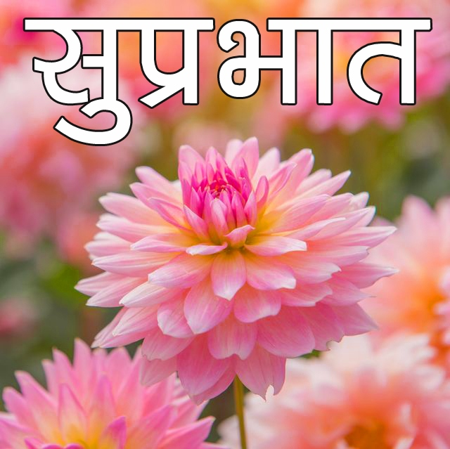 Beautiful Flower Suprabhat Images Pics Download