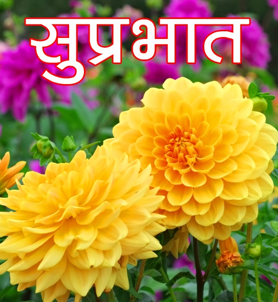 Free Beautiful Flower Suprabhat Images Pics Download