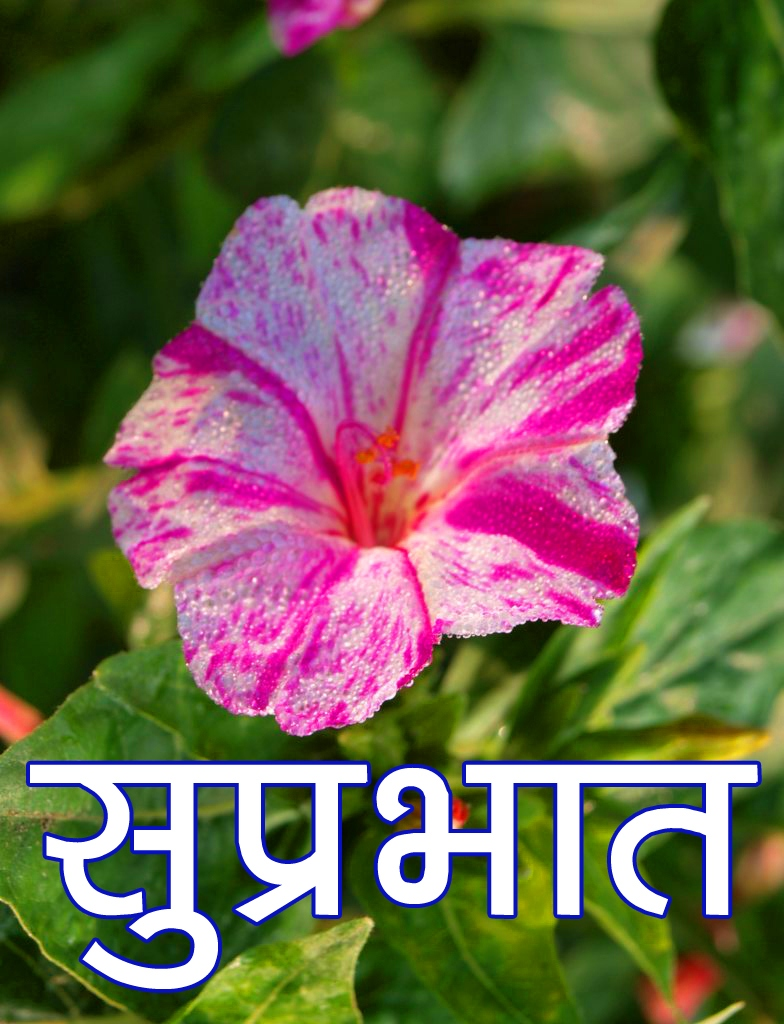 Beautiful Flower Suprabhat Images for Facebook