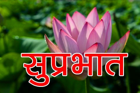 1080p Beautiful Flower Suprabhat Images Pics Download Free