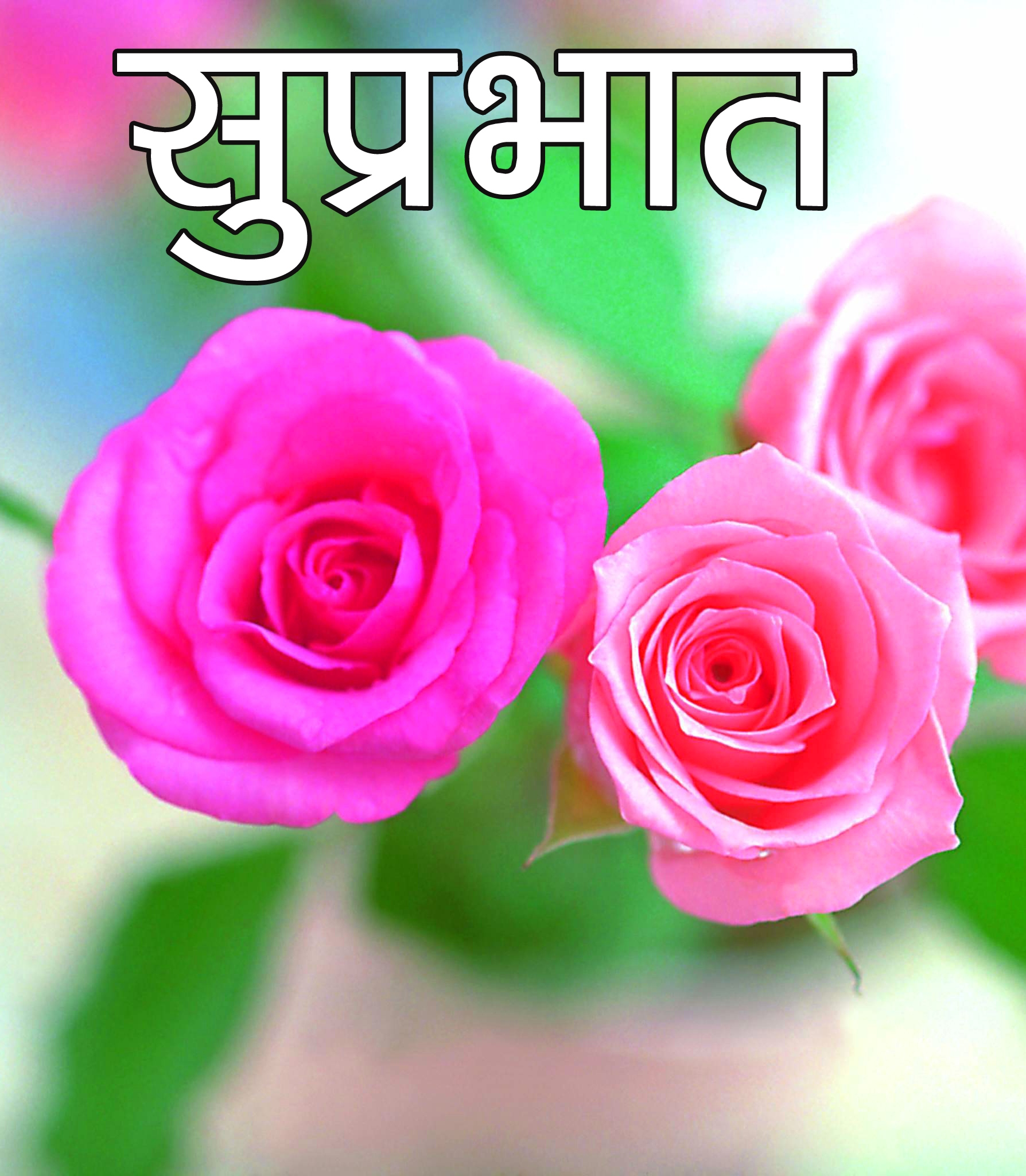 Flower Suprabhat Images Pictures Pics With Rose