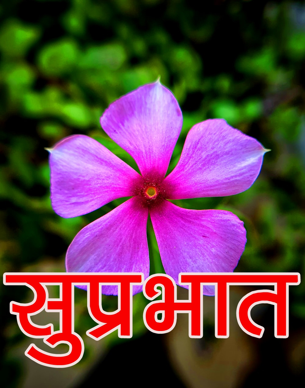 Beautiful Flower Suprabhat Images Pics For Facebook