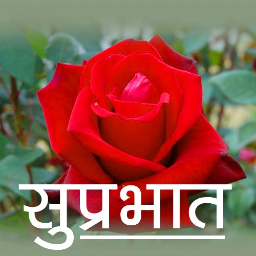 Free New Beautiful Flower Suprabhat Images Pics Download