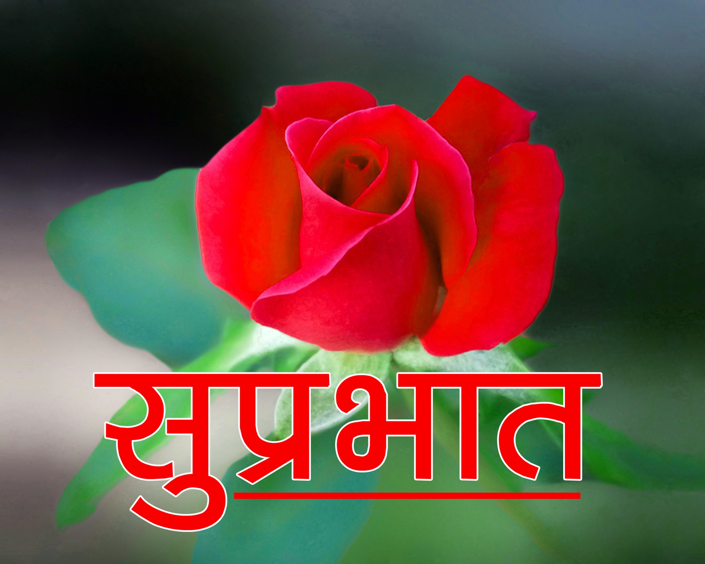 Beautiful Flower Suprabhat Images Wallpaper Free Download