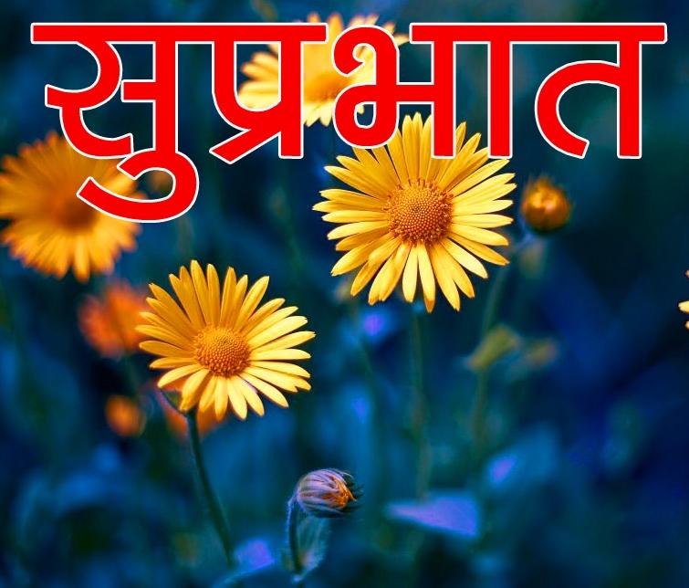 Free Beautiful Flower Suprabhat Images Wallpaper Download