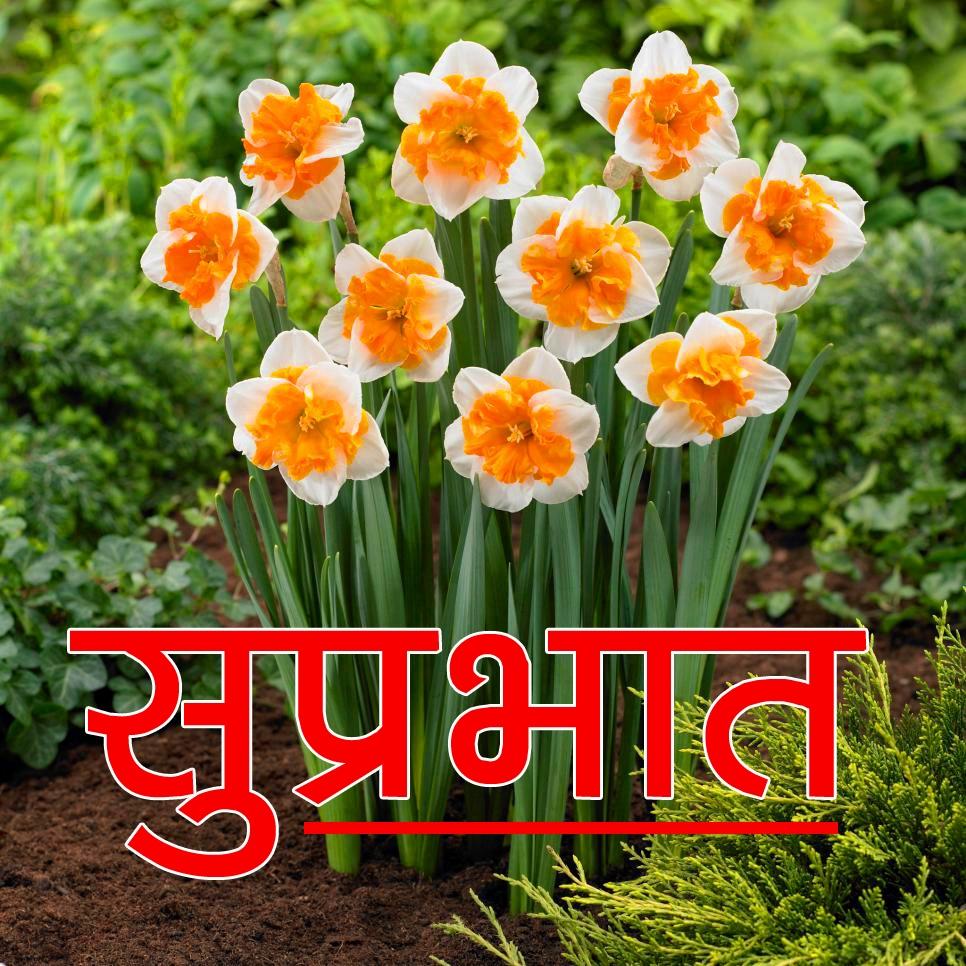 Flower Suprabhat Images Pics Download