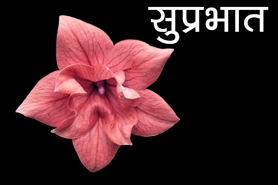 Flower Suprabhat Images Pics