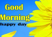 Good Morning Sunflower Images HD