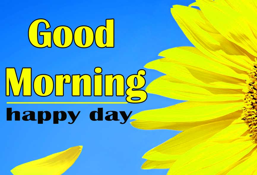New Best Good Morning Sunflower Images Pics Download