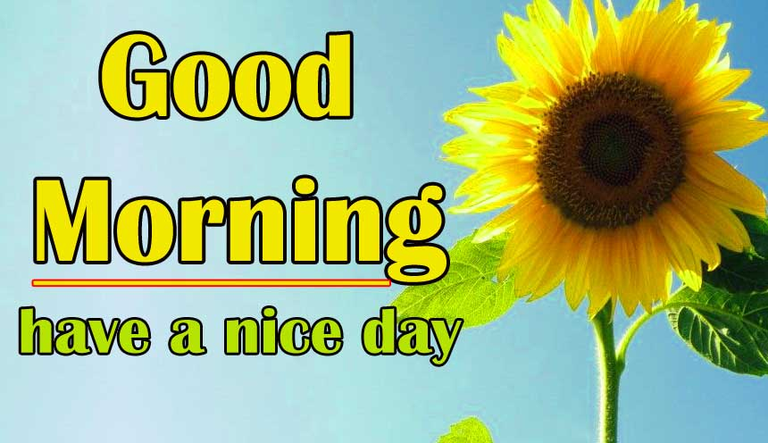 Good Morning Sunflower Images Wallpaper Free Download