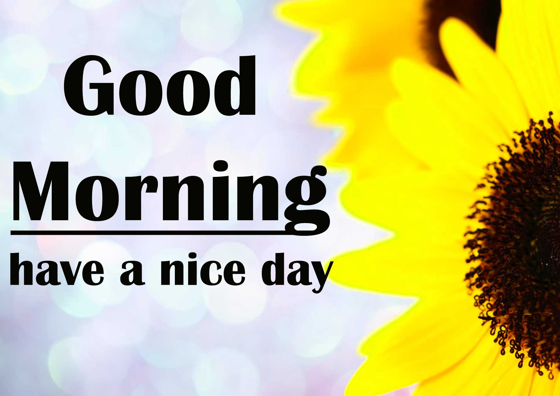 4k Ultra Good Morning Sunflower Images Pics Download