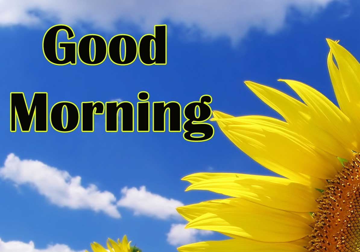 Good Morning Sunflower Images Wallpaper for Friend
