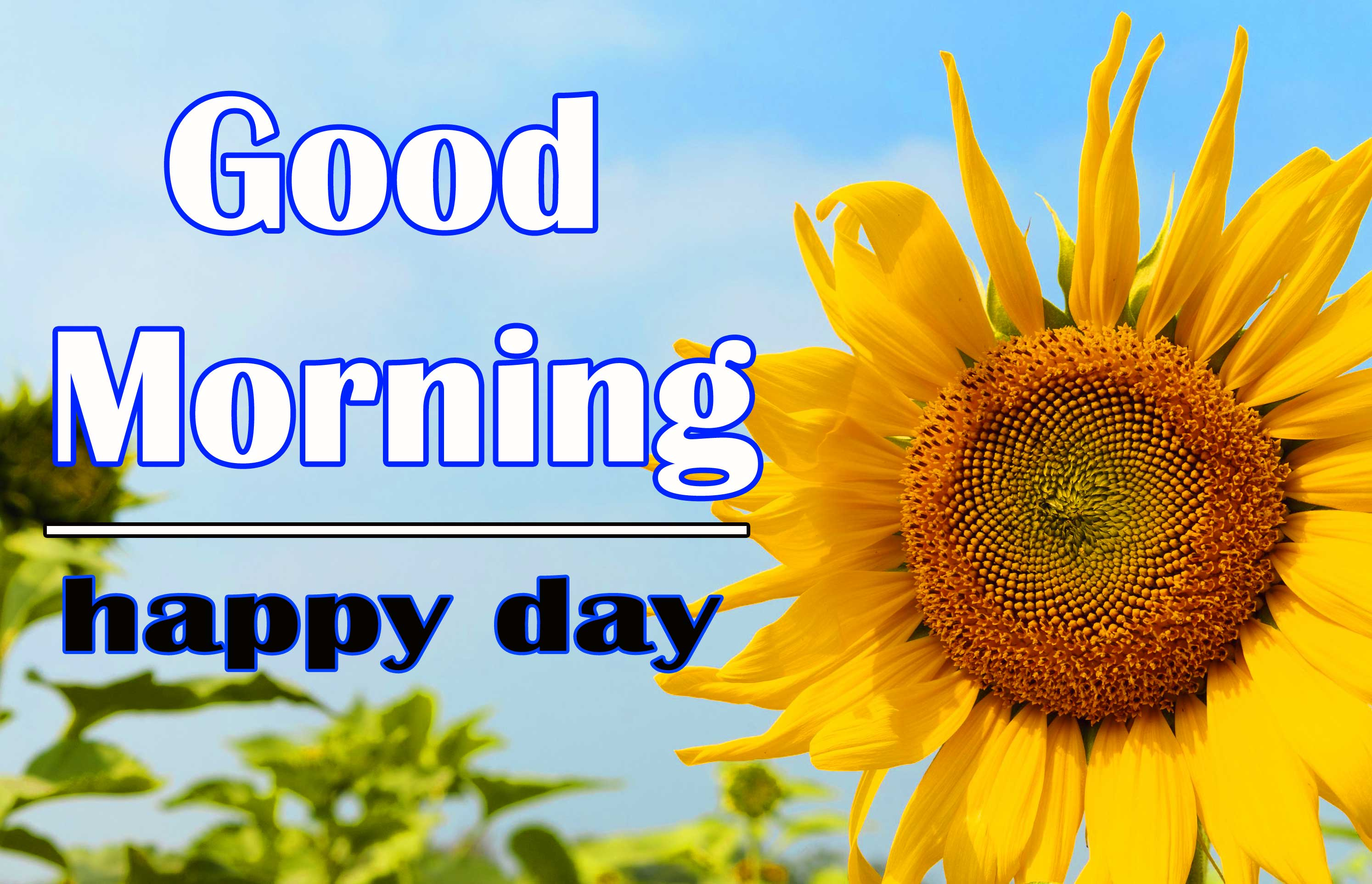 Good Morning Sunflower Images Pics for Facebook