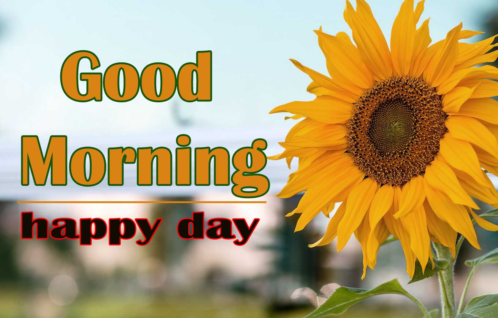 Good Morning Sunflower Images Wallpaper New Download