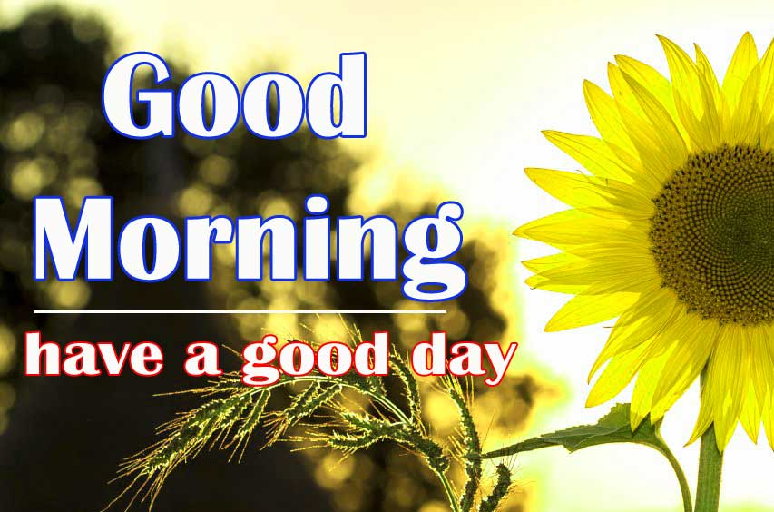 Free Good Morning Sunflower Images Pics Download