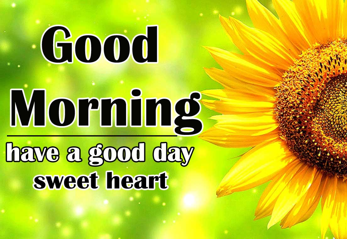 Free Good Morning Sunflower Images Wallpaper Download 2021