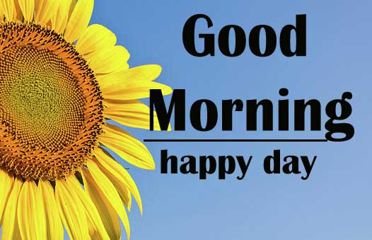 Good Morning Sunflower Images Wallpaper Free for Friend