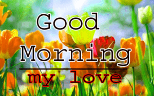 Love Good Morning Wishes Pics Download
