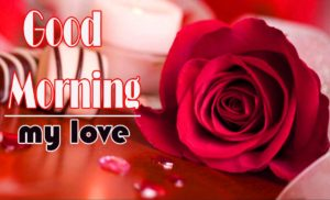 Love Good Morning Wishes Wallpaper With Red Rose