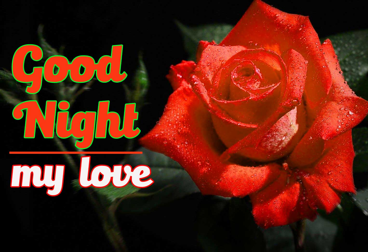 Most Beautiful Good Night Wallpaper With Rose