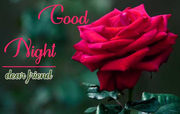 Most Beautiful Good Night Images With Red Rose