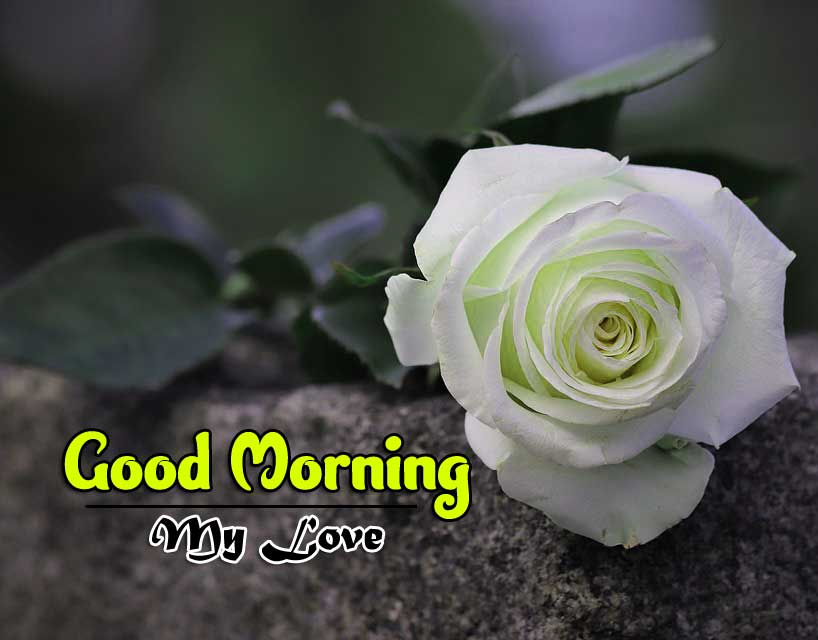 Rose Good Morning Wishes 1