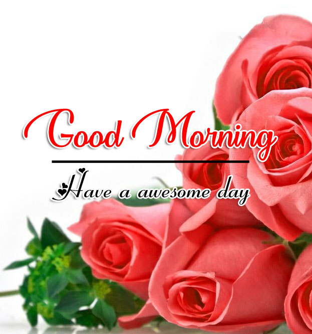 Rose Good Morning Wishes Pics Download
