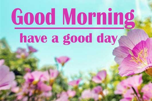 Sunshine Good Morning 16