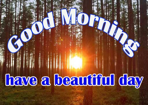Sunshine Good Morning Wishes Images
