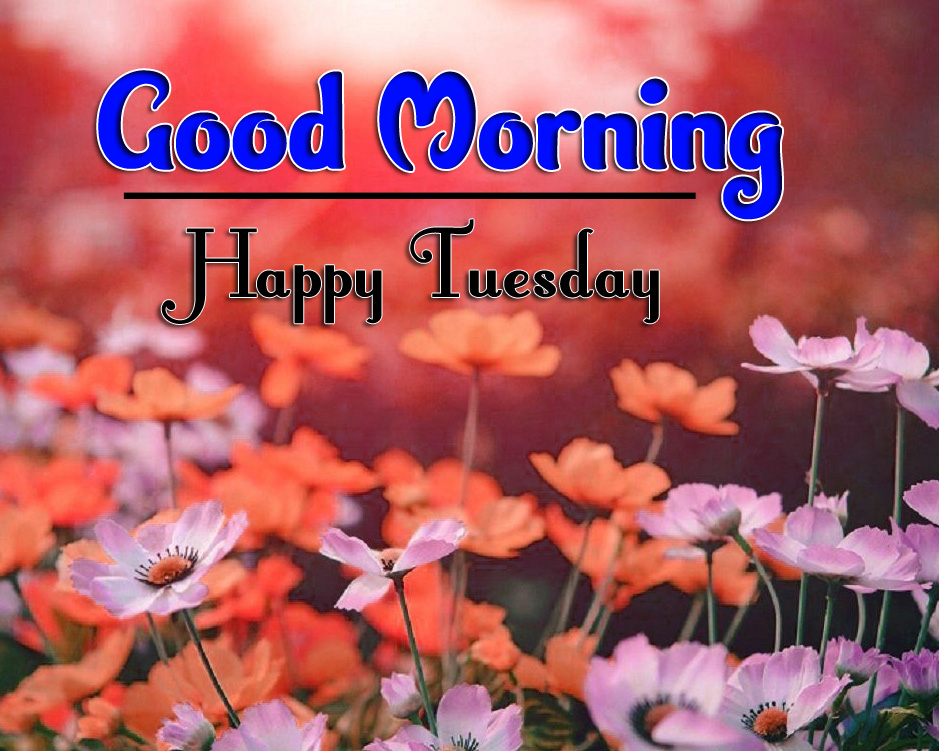 Tuesday Good Morning Wallpaper 2