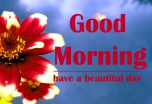 friend good morning Images 13