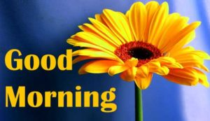 friend good morning Images 19