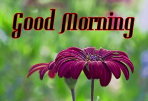 friend good morning Images 6