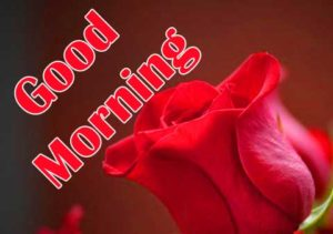 friend good morning Images 8