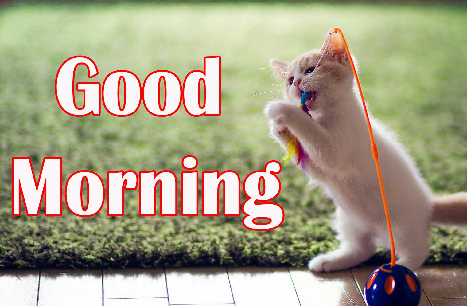 good morning Images Download 6