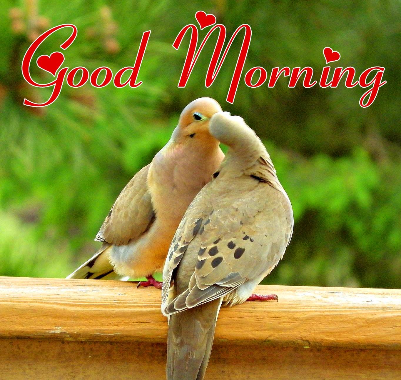 Bird good morning wallpaper Pics Download