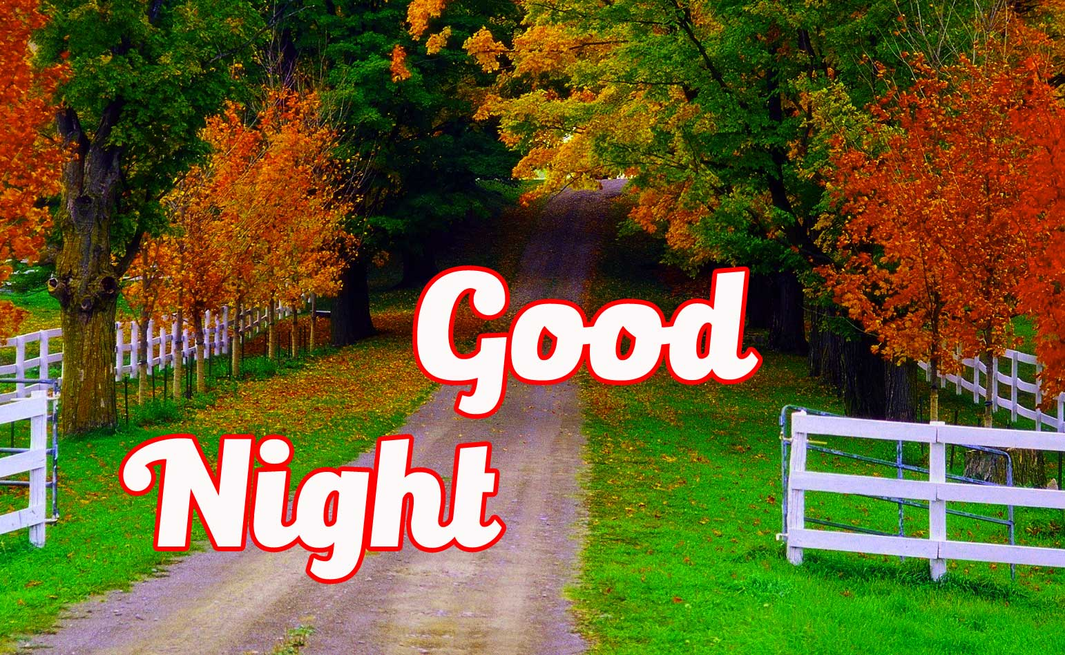 Free good night pics Pictures