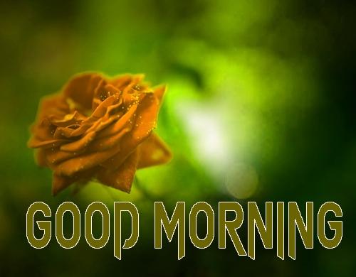 Beautiful Good Morning 13
