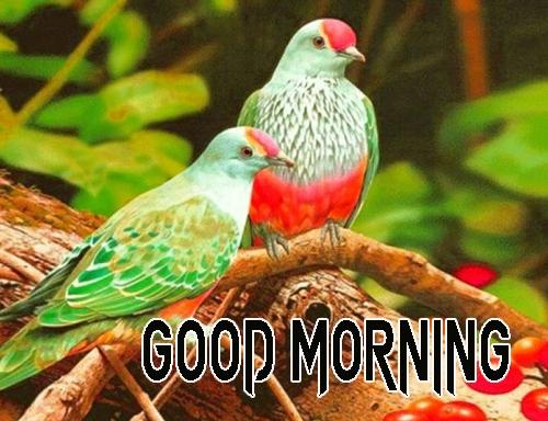 Beautiful Good Morning 18