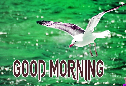 Beautiful Good Morning 19