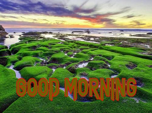 Beautiful Good Morning 5