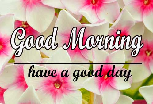 1080p Flower Good Morning Photo HD Download