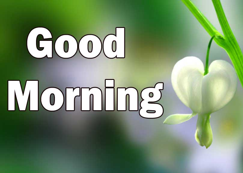 Free 1080p Flower Good Morning Wallpaper Download