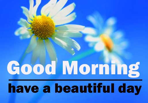 1080p Flower Good Morning pictures Download