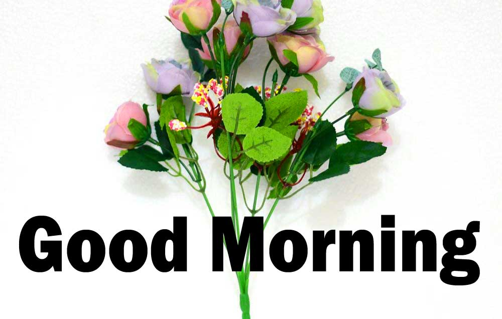 Best Quality 1080p Flower Good Morning Pics Download