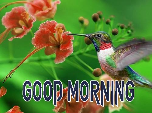 Good Morning Images 1080p Download 1