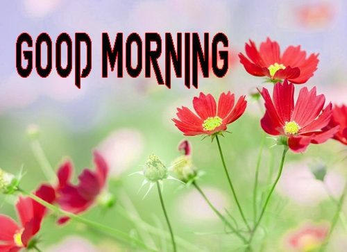 Good Morning Images 1080p Download 12